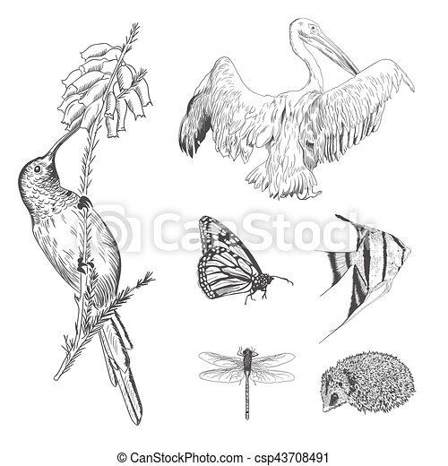 A collection or set of hand drawn vintage styled engraved animals for design - csp43708491