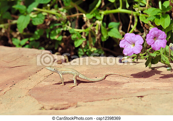 a colorful salamander on a stone near colours the small lizard has