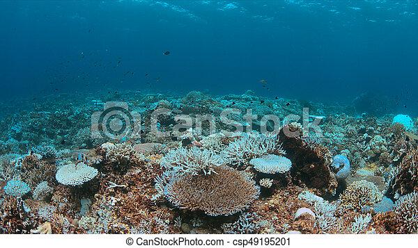 A coral reef dies - csp49195201