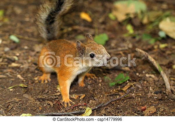 A curious squirrel - csp14779996