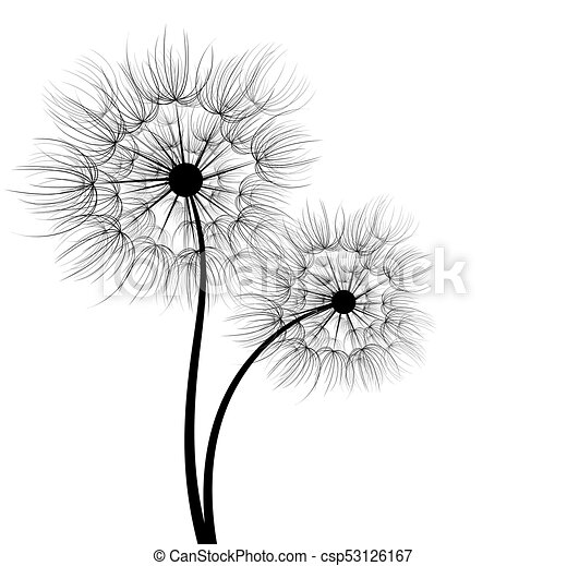 A dandelion flower a flower of a field dandelion with seeds a dandelion flower csp53126167 mightylinksfo