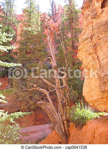 A dead tree in a canyon, Bryce National Park, United States - csp0641538