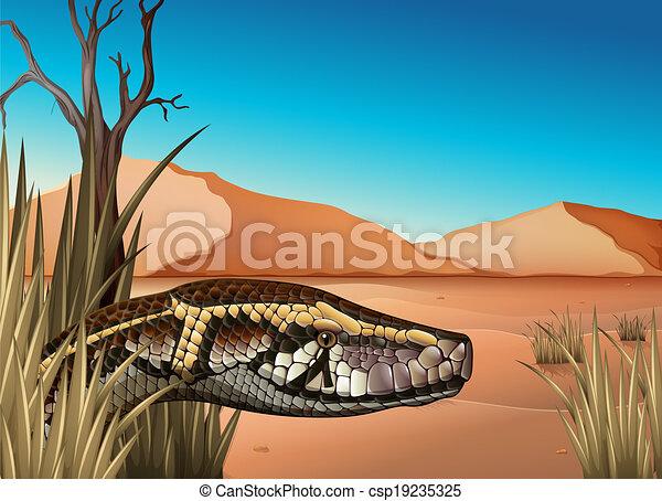 A desert with a reptile - csp19235325