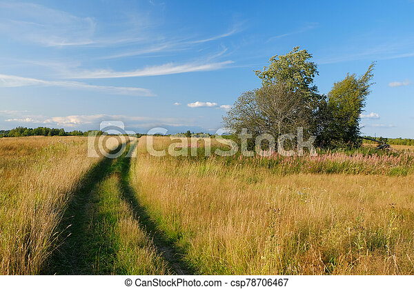 A dirt country road in the field of yellow autumn grass under a blue sky - csp78706467