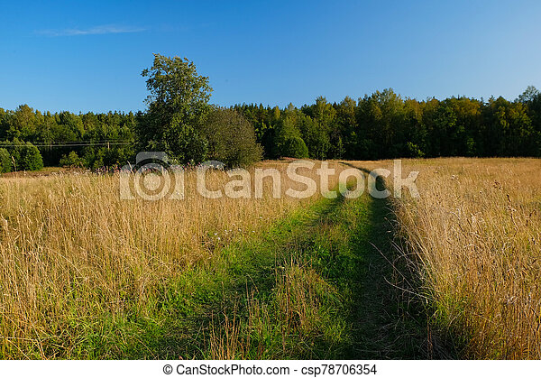 A dirt country road in the field of yellow autumn grass under a blue sky - csp78706354
