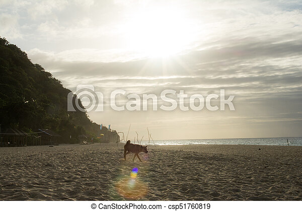 A dog on an empty beach over the evening sunset - csp51760819