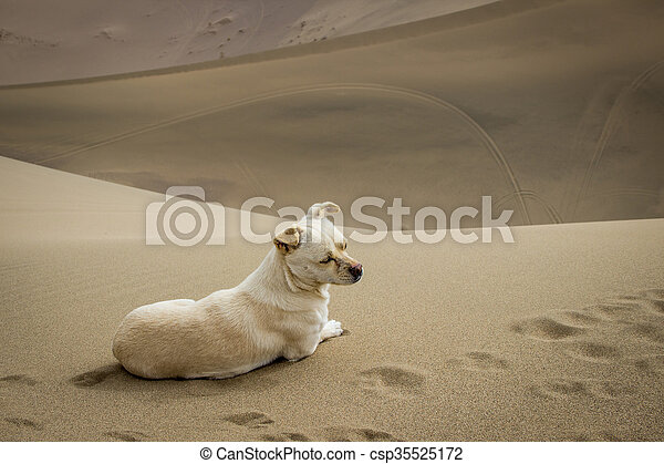 A dog sitting on the desert - csp35525172