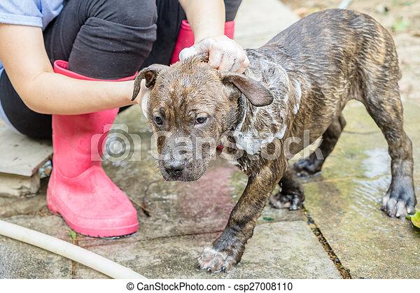 A Dog Taking A Shower   Csp27008110