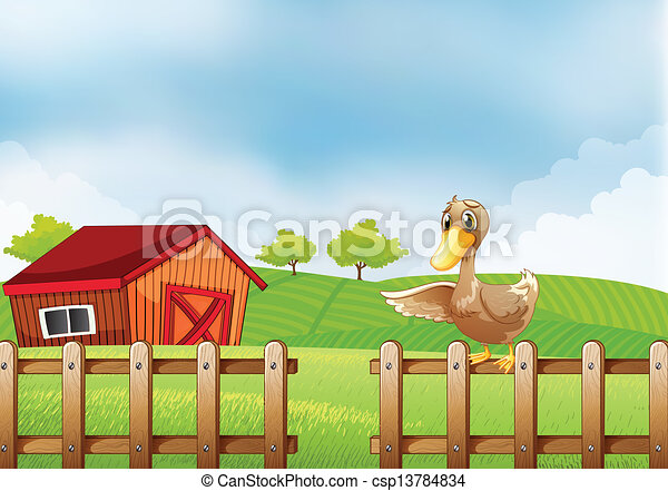 A duck at the farm - csp13784834
