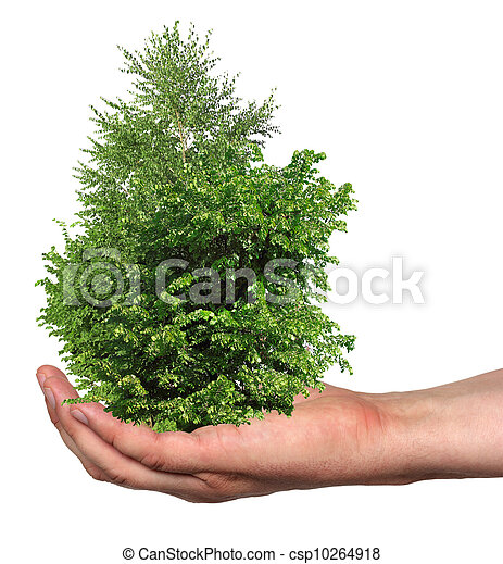 a few trees in a hand, isolated - csp10264918