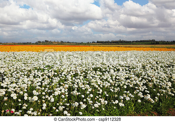 A field of flowers  - csp9112328