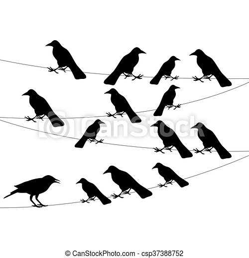 a flock of crows on the wire - csp37388752