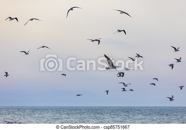 A flock of seagulls and cormorants over the sea - csp85751667