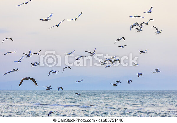 A flock of seagulls and cormorants over the sea - csp85751446