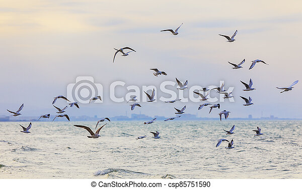 A flock of seagulls and cormorants over the sea - csp85751590