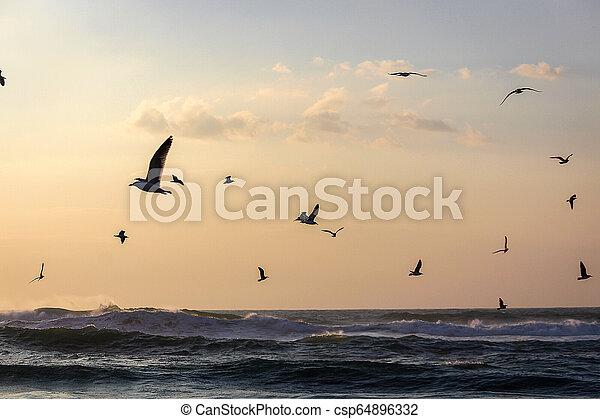 A flock of seagulls flying over the sea - csp64896332