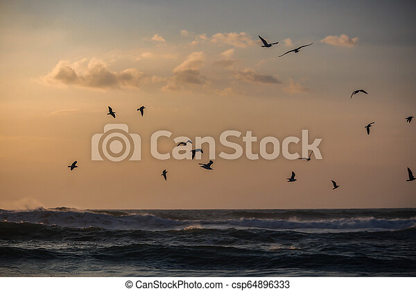 A flock of seagulls flying over the sea - csp64896333