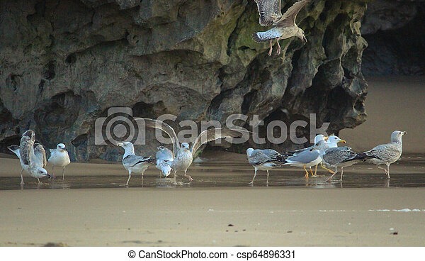 A flock of seagulls in the sand, Sintra, Portugal - csp64896331