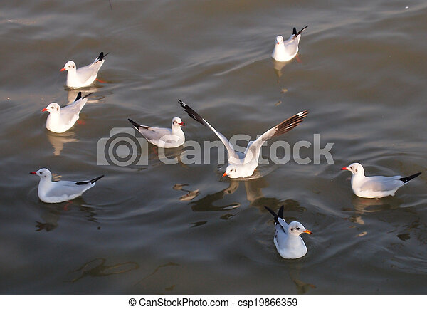 a flock of seagulls on the sea - csp19866359