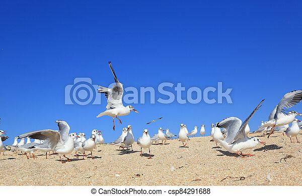 A flock of young seagulls over seashore - csp84291688