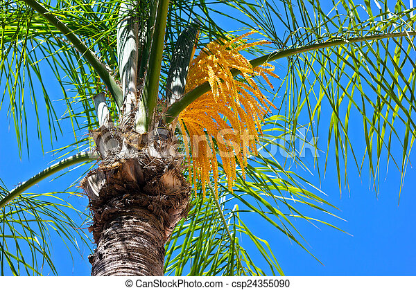 A flowering palm tree a closeup of yellow palm tree flower stock a flowering palm tree a closeup of yellow palm tree flower csp24355090 mightylinksfo Gallery