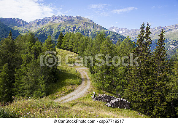 A forest road - csp67719217