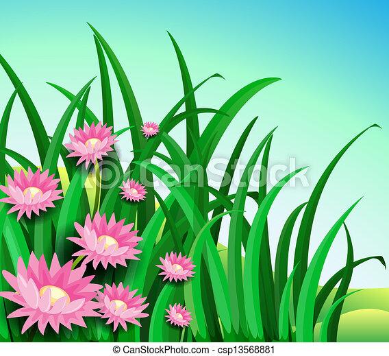 A garden with daisy flowers - csp13568881