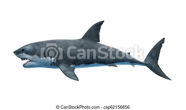 a great white shark - csp62156656