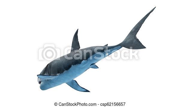 a great white shark - csp62156657