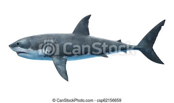 a great white shark - csp62156659