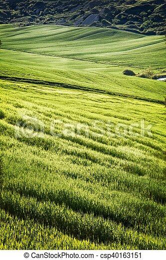 a Green field - csp40163151