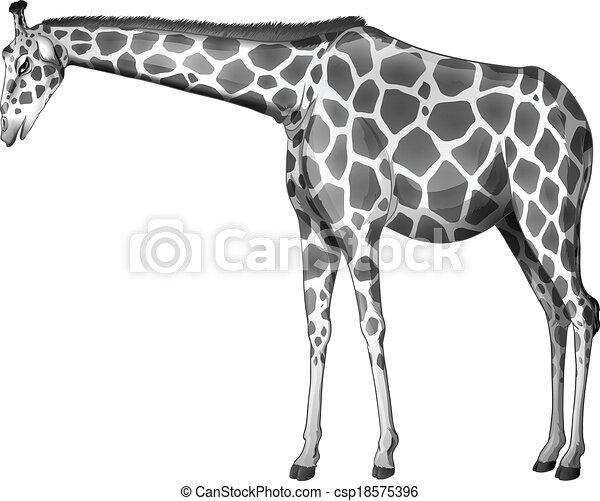 A grey giraffe - csp18575396