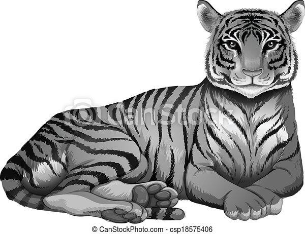 A grey tiger - csp18575406