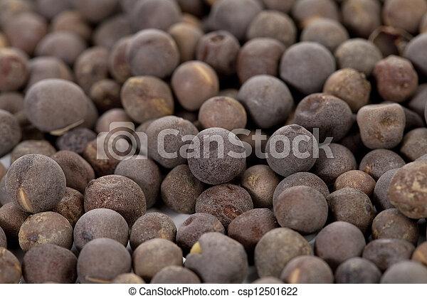 a group of mustard seeds - csp12501622
