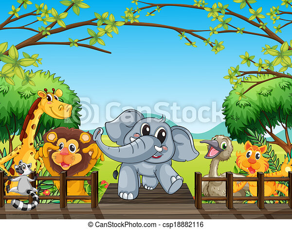 Wild Animals In Forest