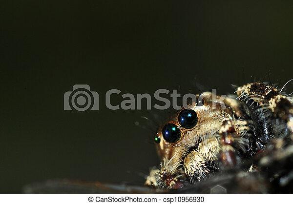 A Hairy Spider - csp10956930