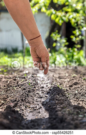 a hand sowing seeds into the soil - csp55426251