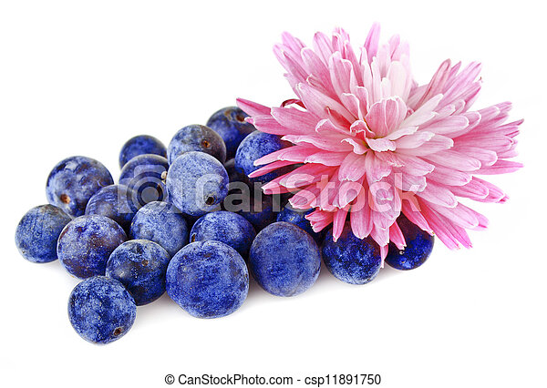 a handful of blueberries - csp11891750