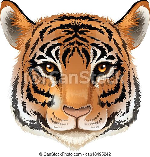 A head of a tiger - csp18495242