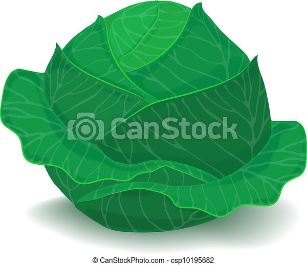 a head of cabbage - csp10195682