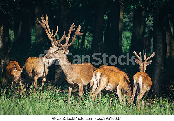 a herd of red deer in a forest - csp39510687