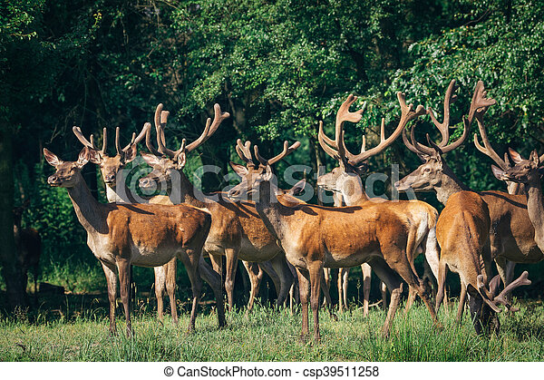 a herd of red deer in a forest - csp39511258