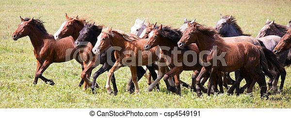 A herd of young horses - csp4549191