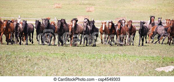 A herd of young horses - csp4549303