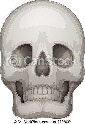 A human skull - csp17796039