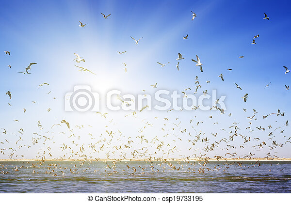 A large number of seagulls flying over the sea surface. - csp19733195