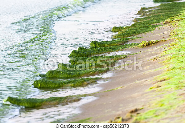 A large number of seaweed in the water - csp56212373