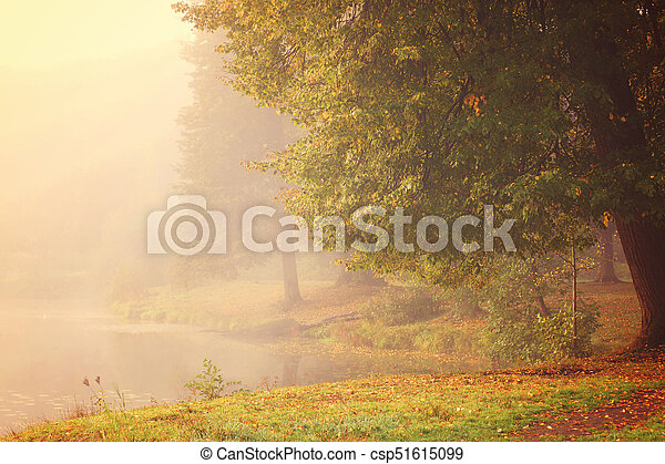 A large tree with autumn leaves on the shore of a lake covered with thick fog. - csp51615099