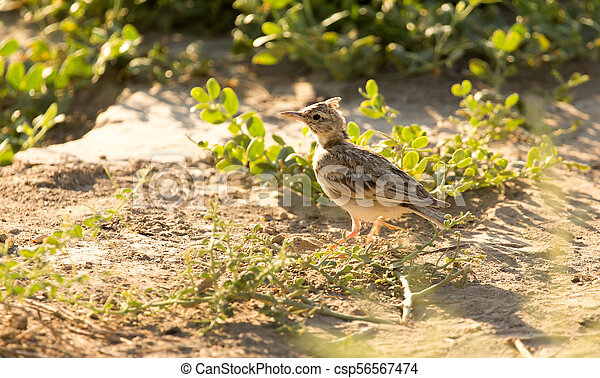 a little bird on the ground in nature - csp56567474