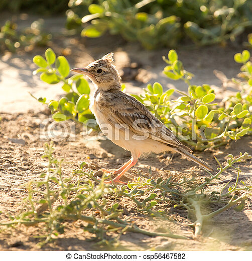 a little bird on the ground in nature - csp56467582